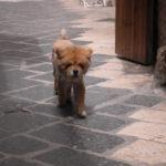 El leon en Bari