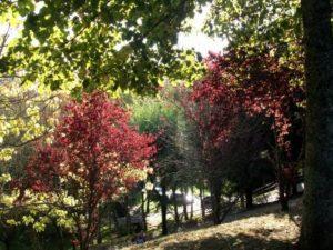 Inicio otoño 2010