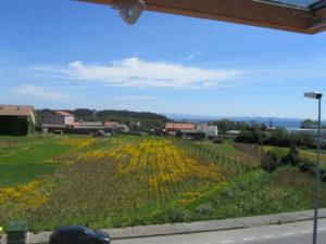 Un nuevo hogar en España
