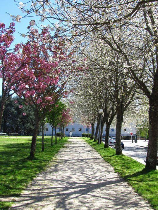 Vivir en Galicia: Lo que ha sido para mí